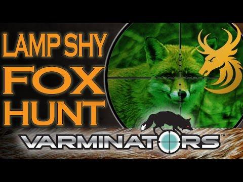 Fox Hunting At Night - Lamp Shy Foxes