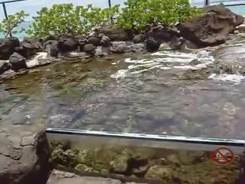 Amazing Outdoor Tank @ Waikiki Aquarium   Piece Of Waikiki Marine Life
