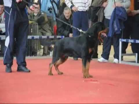 Rottweilers best of breed