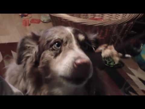 Quan la fam estreny, fins als gossos parlen a la mare ...