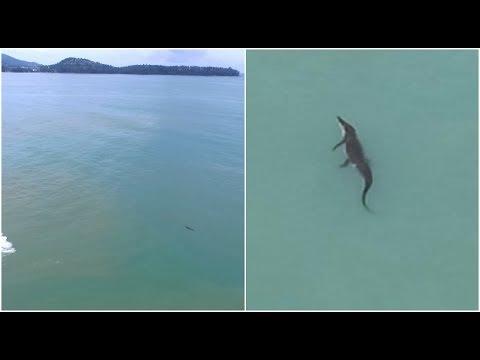 Crocodile swims Phuket! Bangkok Skytrain changes? Interpol's 'red notice'|| August 29