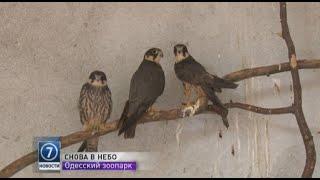 Сотрудники Одесского зоопарка выпустили на свободу хищных птиц
