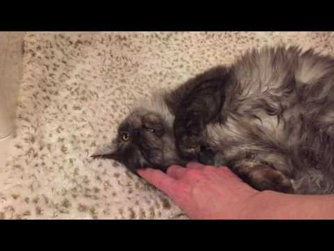 Video of adoptable pet named Gabriel