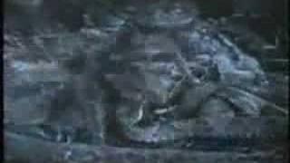 Tarántula caza una Serpiente