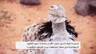 محمية فيفا الأردنية أخفض أرض رطبة في العالم