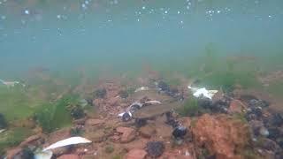 고프로 히어로8 수중 물고기 촬영 테스트 영상