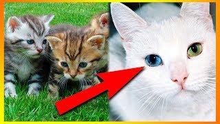 5 Ting Du Ikke Vidste Om Katte