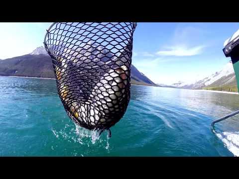 Alberta Mountain Fishing