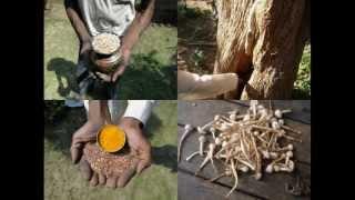 Medicinal Rice P5J Formulations for Eleiotis Excess: Pankaj Oudhia
