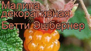 Малина декоративная Бетти Эшбернер (rubus) ???? обзор: как сажать, саженцы малины Бетти Эшбернер