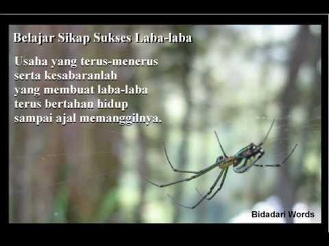 Tak Mungkin Termiliki by Silla