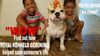 """AMERICAN BULLY NEWS"" Find out how Royal Kennels Geronimo helped save someone's life. Royal Kennels"