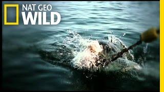 Trailer | Shark Attack Experiment Live!
