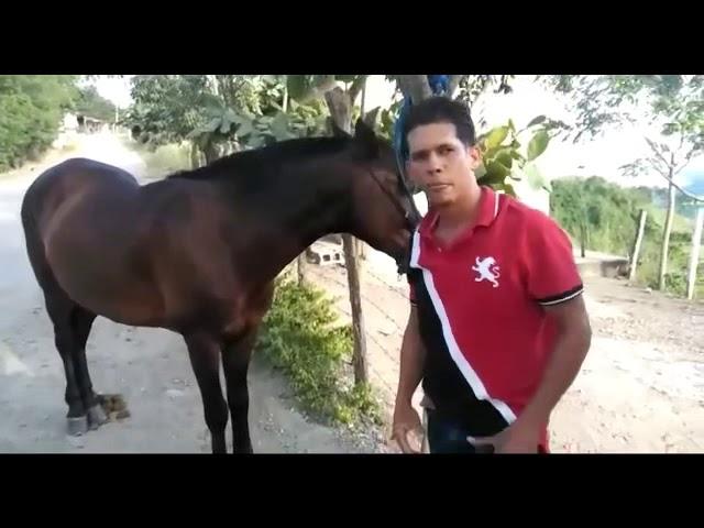 Propietario denuncia abuso sexual contra sus yeguas en La Vega; pide ayuda a las autoridades