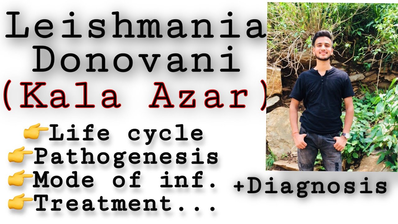 Képek a leishmania parazitákról - Leishmania paraziták képeket. Leishmania kerekféreg ciszták