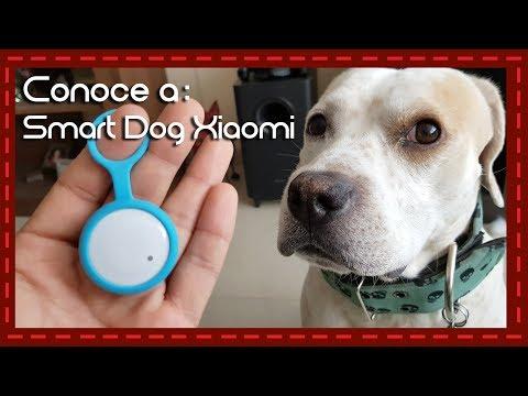 Conoce a: Smart Dog de Xiaomi