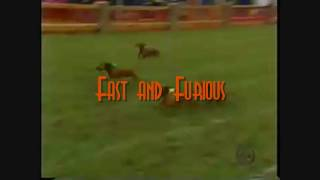 Dachshund Racing-eye Of The Tiger