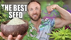 HEMP SEEDS ARE AMAZING & WHY YOU SHOULD EAT THEM!