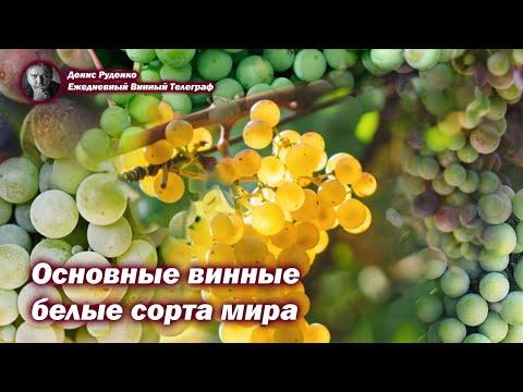Основные винные белые сорта винограда