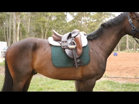 How I tack up for a dressage lesson/clinic + Total Saddle Fit Giveaway!
