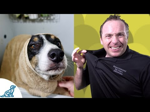 Simple Hacks To Bath Your Dog - Professional Dog Training Tips