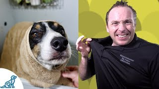 Simple Hacks To Bath Your Dog  Professional Dog Training Tips