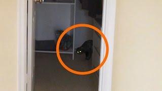 Вызов духов Египетский кот