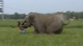 Elephant Charges At Man During Rampage