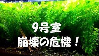 【9号室ミナミヌマエビ水槽:突然の暴走モード突入!~高すぎる硝酸塩濃度に四苦八苦】