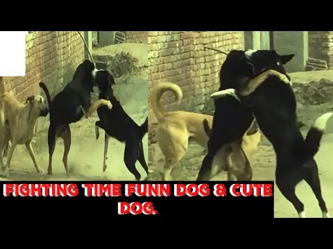 ♥♥♥fighting time with funn dog & cute babeis dog ♥♥♥AnimalS LovE