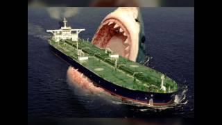 Самая большая акула в мире мегалодон