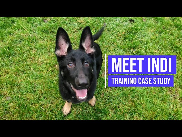 Recall and long lead training for a German Shepherd puppy