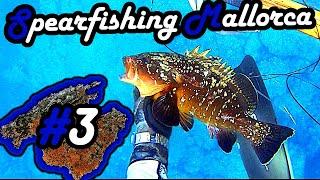Video Spearfishing - Mallorca - Part 3 - Thuna, Grouper, Murena, Corvina nigra download MP3, 3GP, MP4, WEBM, AVI, FLV Desember 2017
