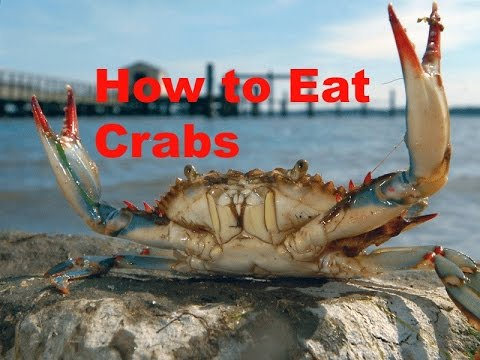 How to Eat and Pick Maryland Blue Crabs, The Best way.