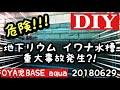 【アクアリウム】イワナ水槽で重大事故発生?!地下リウム日淡水槽の悲劇!!!
