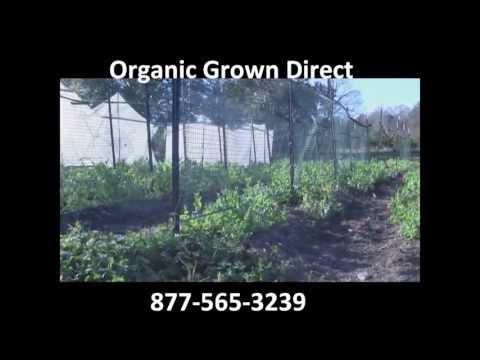 Buy Organic Produce Online