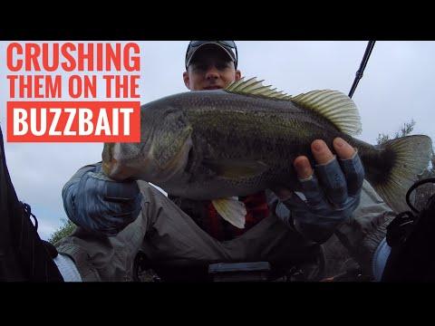 Bass Fishing: Sacramento River - Top Water   Adventure