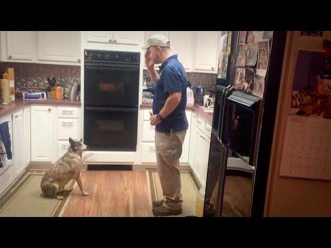 Dog Trick: Salute