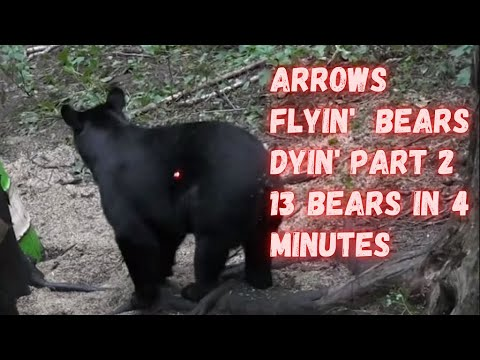 ARROW IMPACTS – 13 bears shot in less than 4 minutes