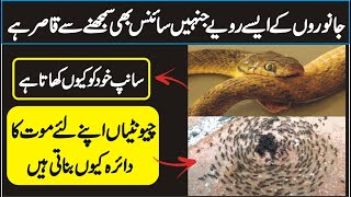 Four Animals Behaviors, Science Can't Explain In Urdu Hindi