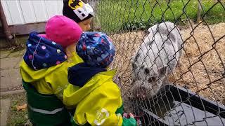 Zwierzęta i dzieci w Zielonym Przedszkolu