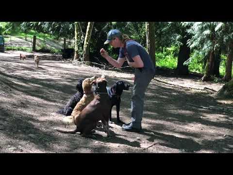 Unleashed Dog Camp - Dog Day Care Renton, WA