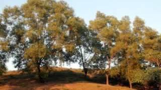 Shah Abdul Karim Sylhet Sunamgonj Bangla Folk Song Bhulia Jaibai Re Bandhu