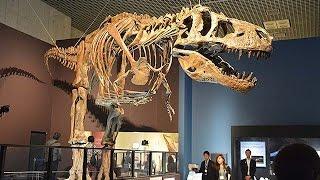 国立科学博物館「恐竜博2016」=肉食恐竜スピノサウルス、復元骨格日本初公開