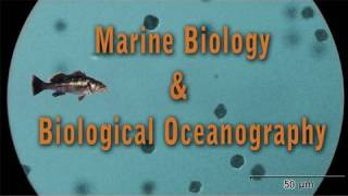 Interested in marine biology and oceanography?