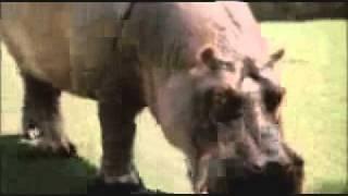 Au sud des nuages (2003) - Trailer