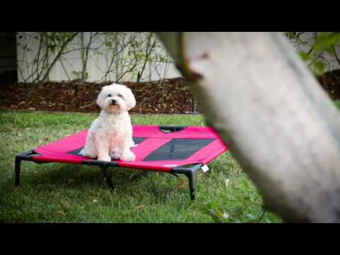 How to Create a Pet-Friendly Yard