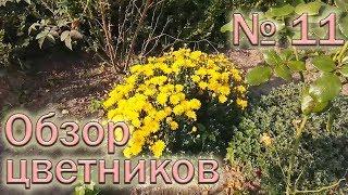 Обзор цветников №11 (08.09.2018). Гортензии, хризантемы, гейхеры, хосты и другие цветы