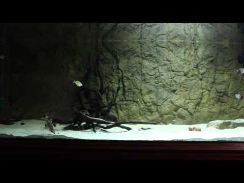 Community Aquarium 500L