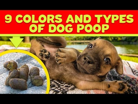 9 Colors And Types Of Dog Poop You Should Never Ever Ignore